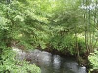 rio_ugarana